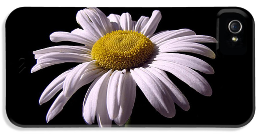 Daisy IPhone 5 / 5s Case featuring the photograph Daisy by David Dehner