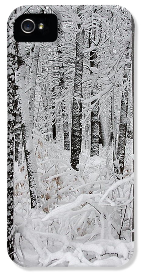 Winter Scene IPhone 5 / 5s Case featuring the photograph Deep Snow In The Forest by Lynn-Marie Gildersleeve