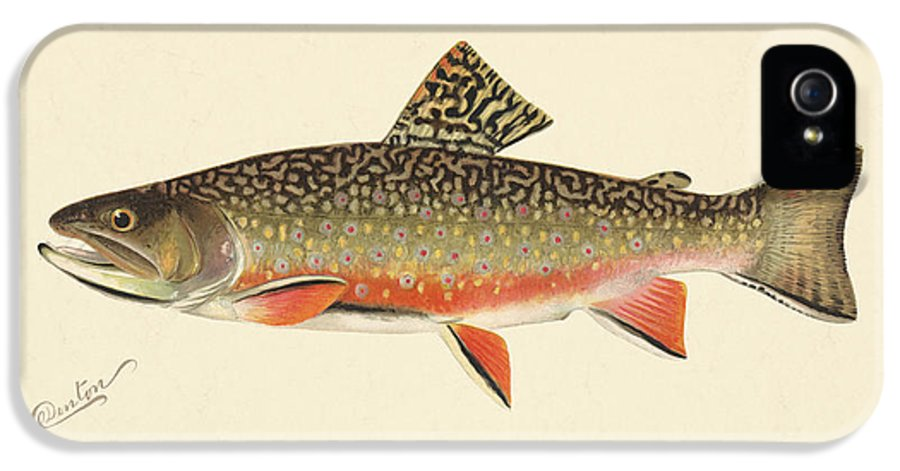 Antique IPhone 5 / 5s Case featuring the painting Denton Brook Trout by Gary Grayson