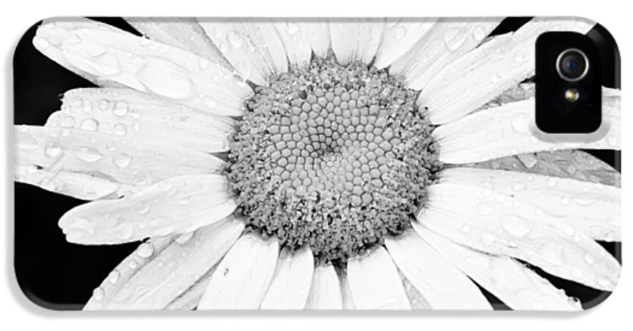 3scape Photos IPhone 5 / 5s Case featuring the photograph Dew Drop Daisy by Adam Romanowicz