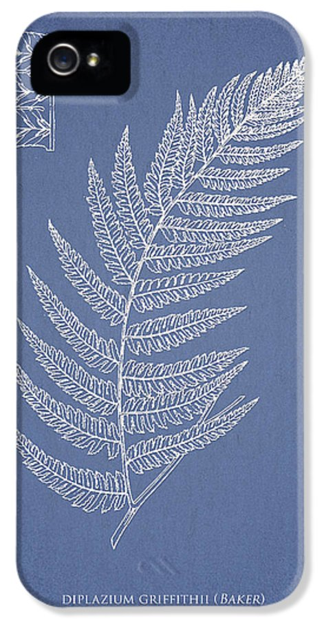 Fern IPhone 5 / 5s Case featuring the drawing Diplazium Griffithii by Aged Pixel