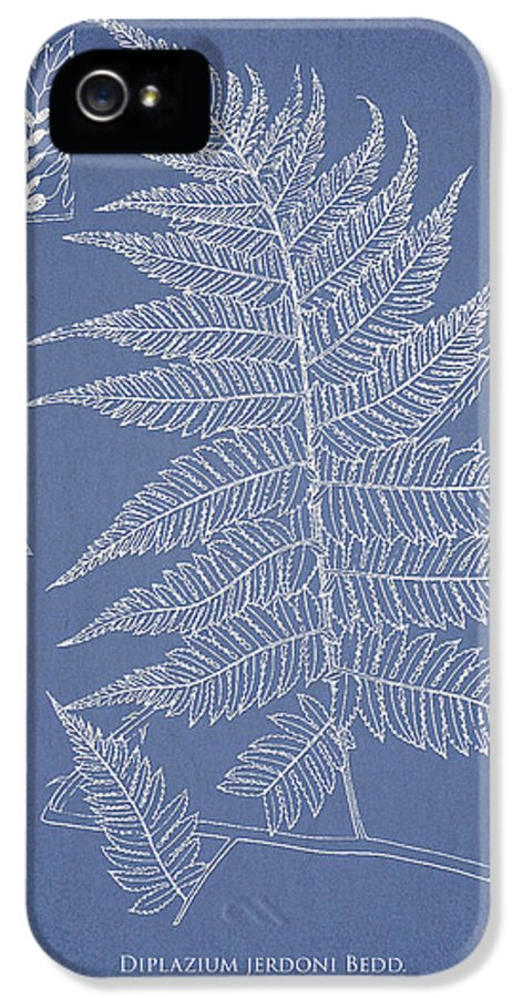 Fern IPhone 5 / 5s Case featuring the drawing Diplazium Jerdoni by Aged Pixel