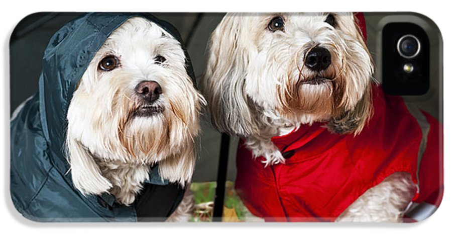 Dogs IPhone 5 / 5s Case featuring the photograph Dogs Under Umbrella by Elena Elisseeva