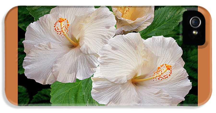White Hibiscus IPhone 5 / 5s Case featuring the photograph Dreamy Blooms - White Hibiscus by Ben and Raisa Gertsberg