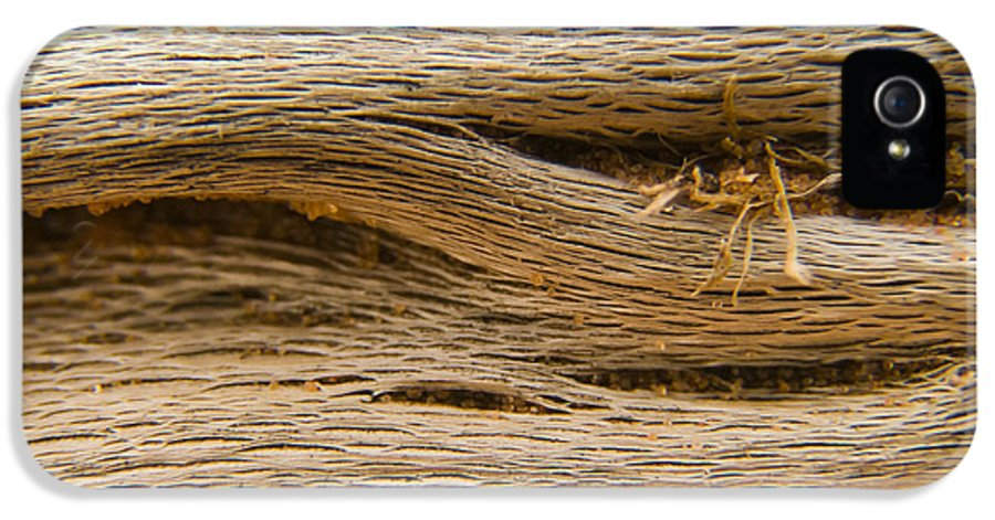 3scape Photos IPhone 5 / 5s Case featuring the photograph Driftwood 1 by Adam Romanowicz