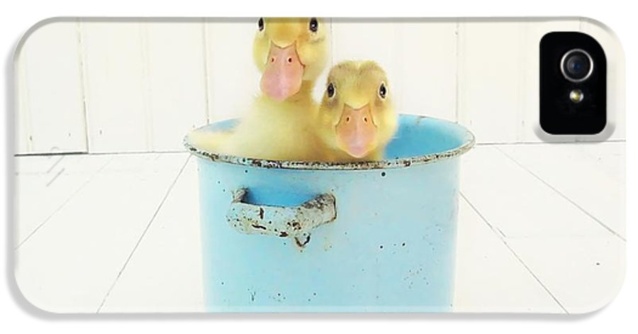 Ducklings IPhone 5 / 5s Case featuring the photograph Duck Soup by Amy Tyler