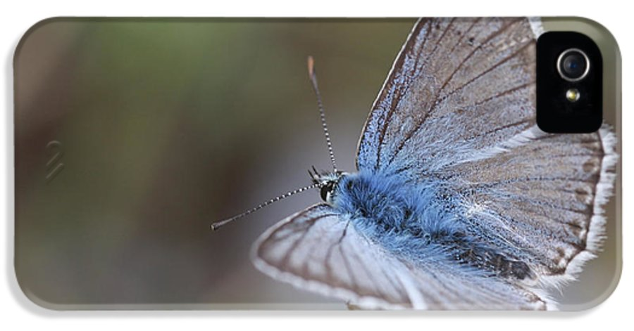 Eastern Baton Blue IPhone 5 / 5s Case featuring the photograph Eastern Baton Blue by Amos Dor