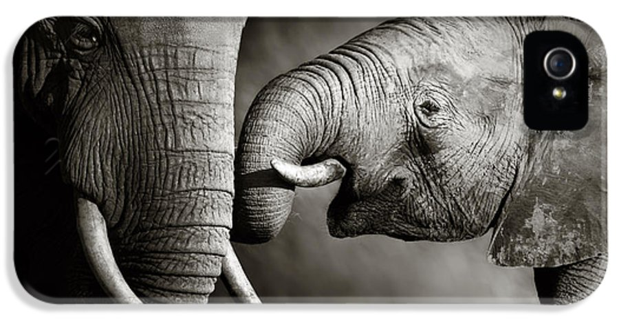 Elephant; Interact; Touch; Gently; Trunk; Young; Large; Small; Big; Tusk; Together; Togetherness; Passionate; Affectionate; Behavior; Art; Artistic; Black; White; B&w; Monochrome; Image; African; Animal; Wildlife; Wild; Mammal; Animal; Two; Moody; Outdoor; Nature; Africa; Nobody; Photograph; Addo; National; Park; Loxodonta; Africana; Muddy; Caring; Passion; Affection; Show; Display; Reach IPhone 5 / 5s Case featuring the photograph Elephant Affection by Johan Swanepoel