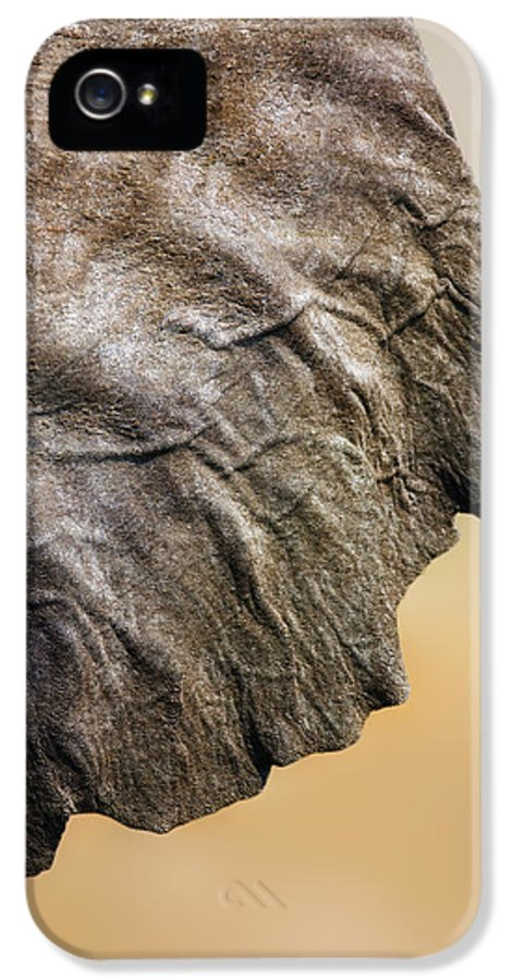 Texture IPhone 5 / 5s Case featuring the photograph Elephant Ear Close-up by Johan Swanepoel
