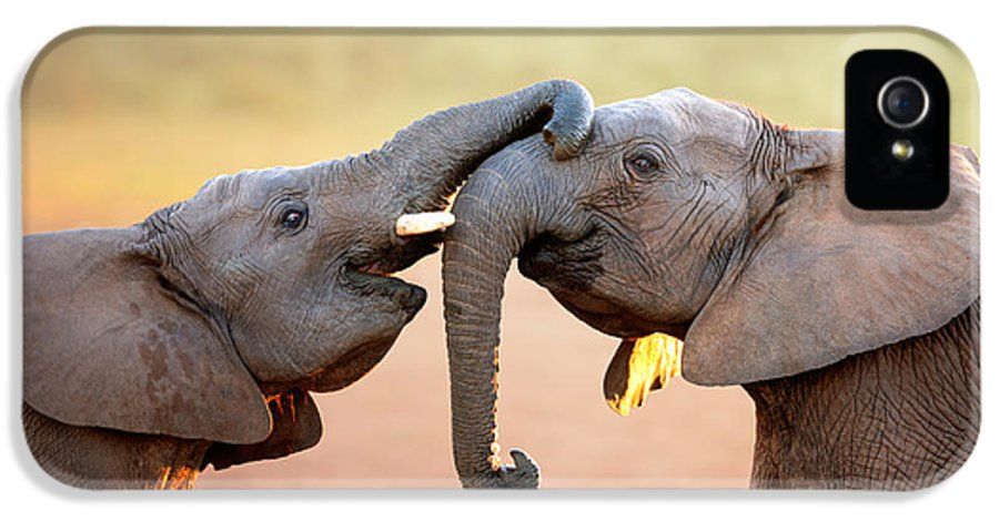 Elephant IPhone 5 / 5s Case featuring the photograph Elephants Touching Each Other by Johan Swanepoel
