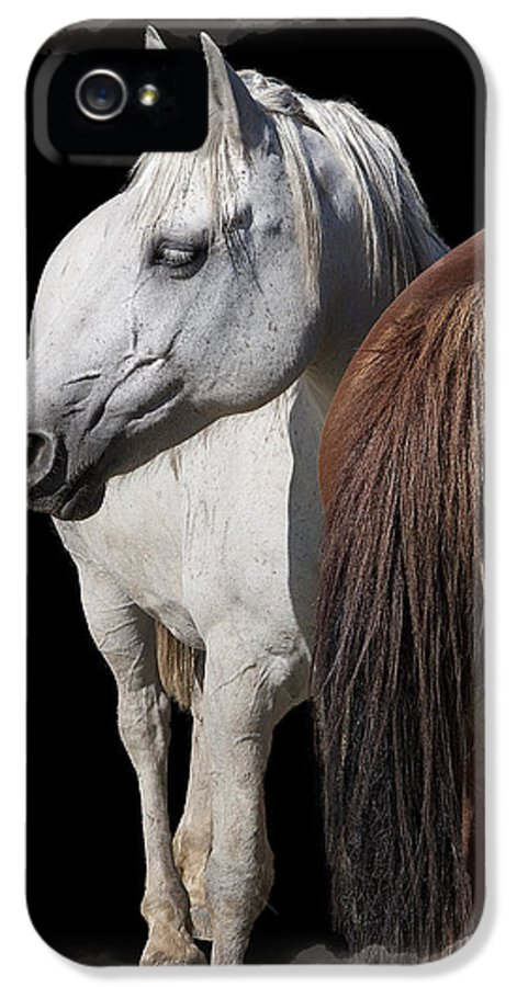 Horses IPhone 5 / 5s Case featuring the digital art Equine Horse Head And Tail by Daniel Hagerman
