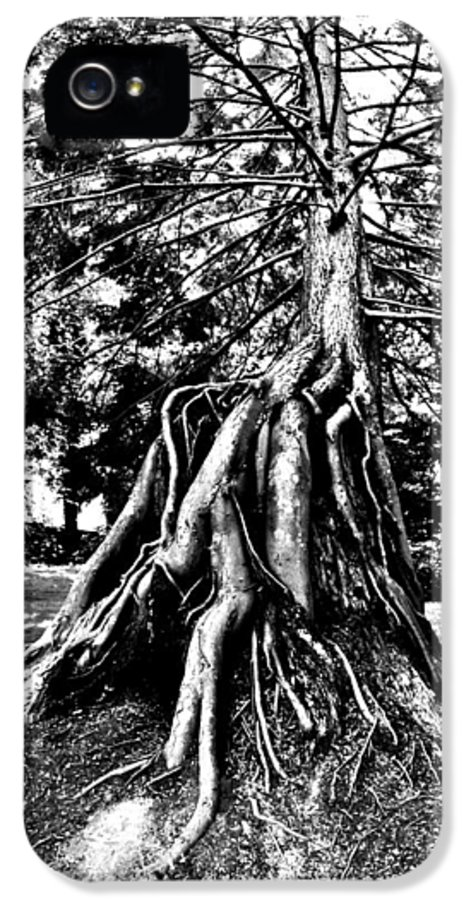 Tree IPhone 5 / 5s Case featuring the photograph Exposed by Benjamin Yeager