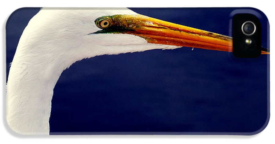 Birds IPhone 5 / 5s Case featuring the photograph Eyes Of Steel by Karen Wiles