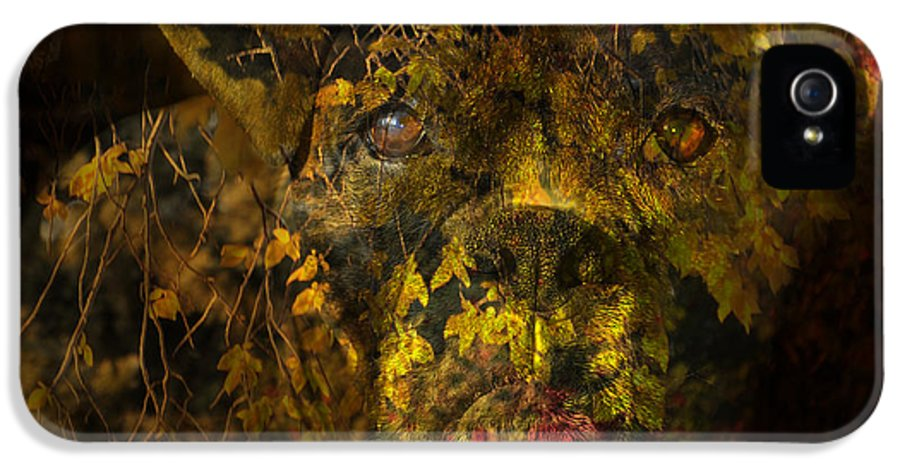 Boxer Dog IPhone 5 / 5s Case featuring the digital art Fall Boxer by Judy Wood