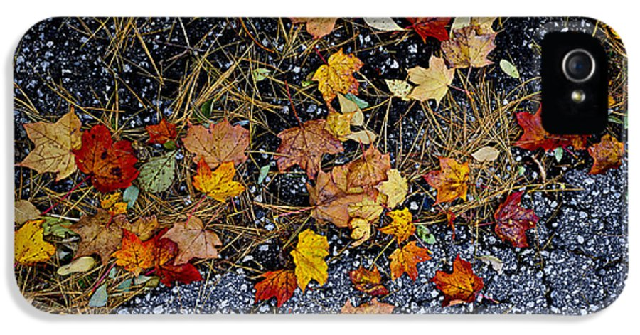 Leaves IPhone 5 / 5s Case featuring the photograph Fall Leaves On Pavement by Elena Elisseeva