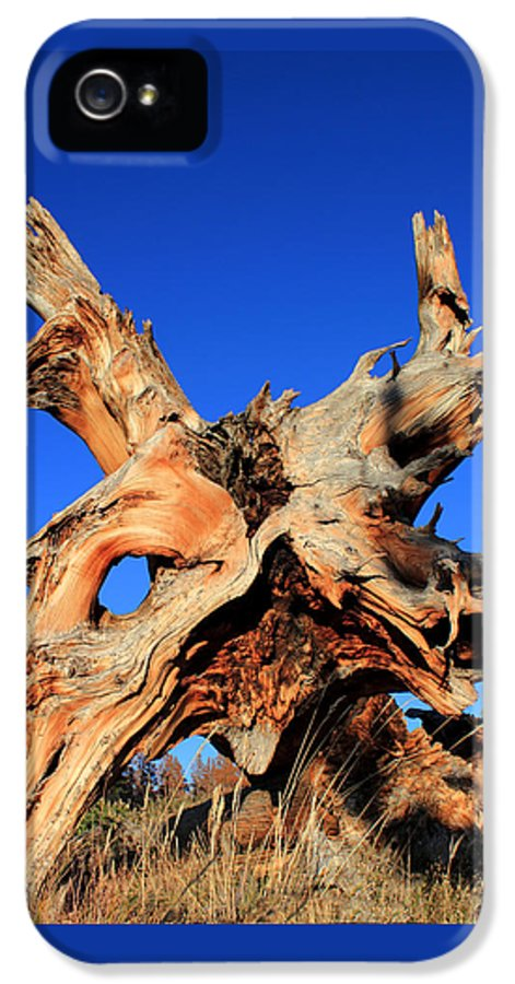 Tree Roots IPhone 5 / 5s Case featuring the photograph Fallen by Shane Bechler