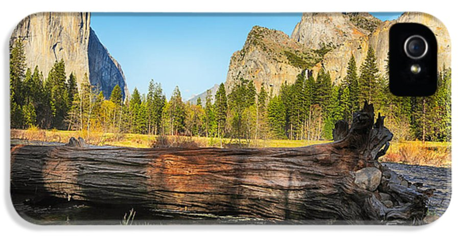 Yosemite IPhone 5 / 5s Case featuring the photograph Fallen Tree In Yosemite by Jane Rix