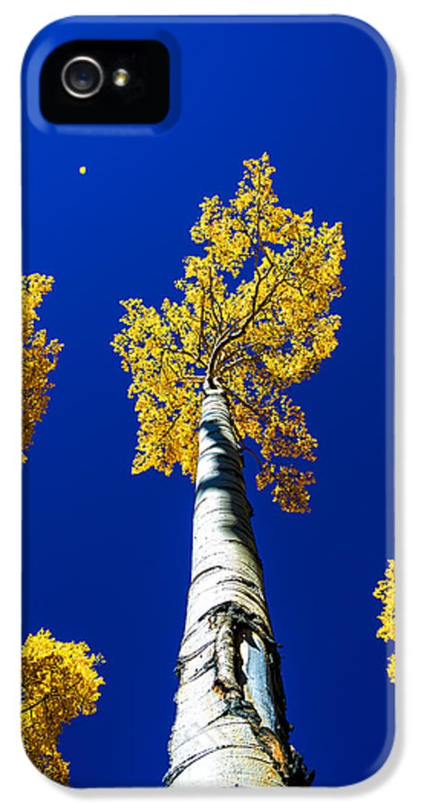 Falling Leaf IPhone 5 / 5s Case featuring the photograph Falling Leaf by Chad Dutson