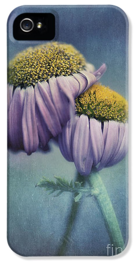 Daisy IPhone 5 / 5s Case featuring the photograph Farewell by Priska Wettstein