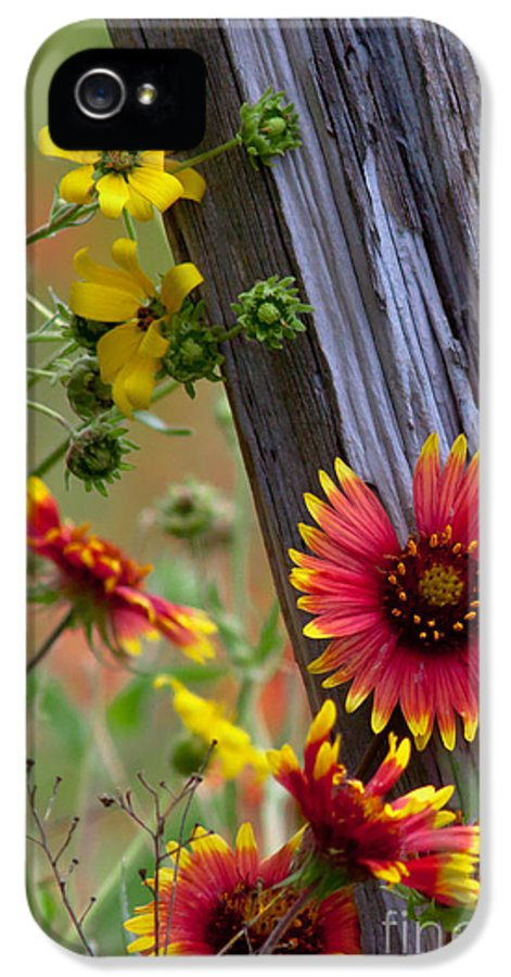 Plants IPhone 5 / 5s Case featuring the photograph Fenceline Wildflowers by Robert Frederick