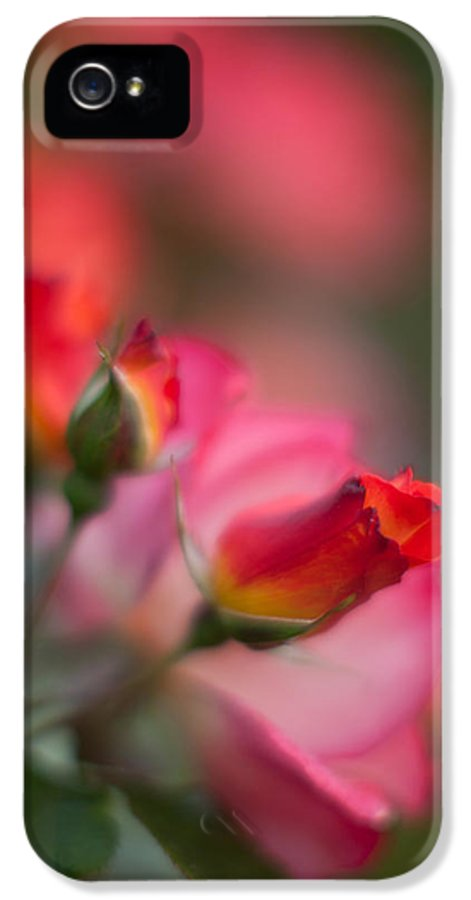 Rose IPhone 5 / 5s Case featuring the photograph Fiery Roses by Mike Reid