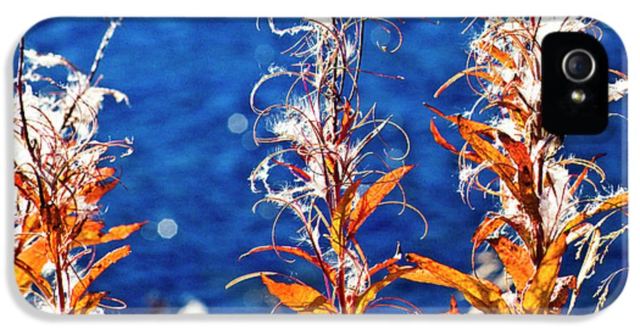Fireweed IPhone 5 / 5s Case featuring the photograph Fireweed Flower by Heiko Koehrer-Wagner