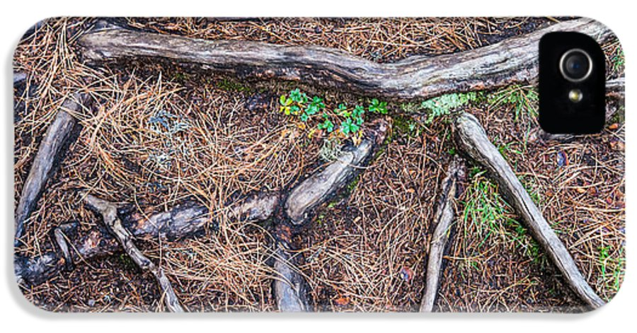 Forest Floor IPhone 5 / 5s Case featuring the photograph Forest Floor With Tree Roots by Matthias Hauser