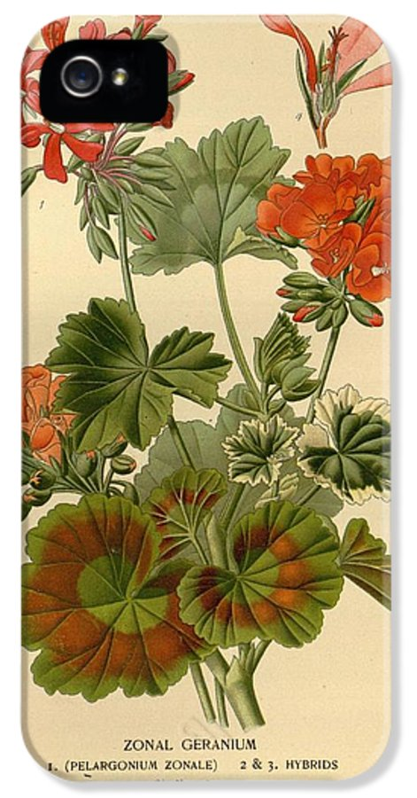 Geraniums IPhone 5 / 5s Case featuring the painting Geraniums by Philip Ralley