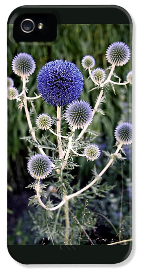 Thistles IPhone 5 / 5s Case featuring the photograph Globe Thistle by Rona Black