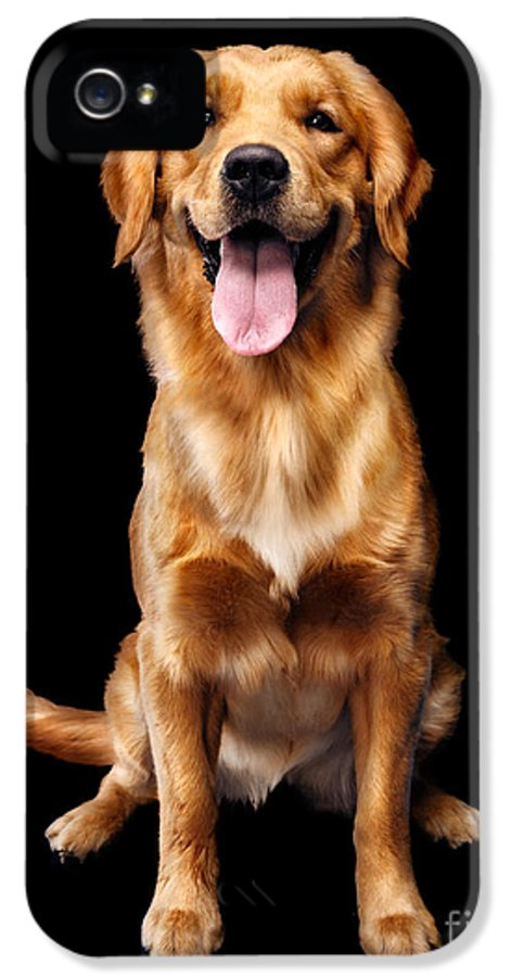 Dog IPhone 5 / 5s Case featuring the photograph Golden Retriever On Black Background by Oleksiy Maksymenko