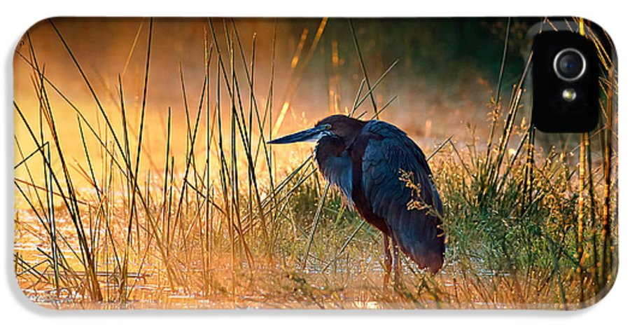 Heron IPhone 5 / 5s Case featuring the photograph Goliath Heron With Sunrise Over Misty River by Johan Swanepoel
