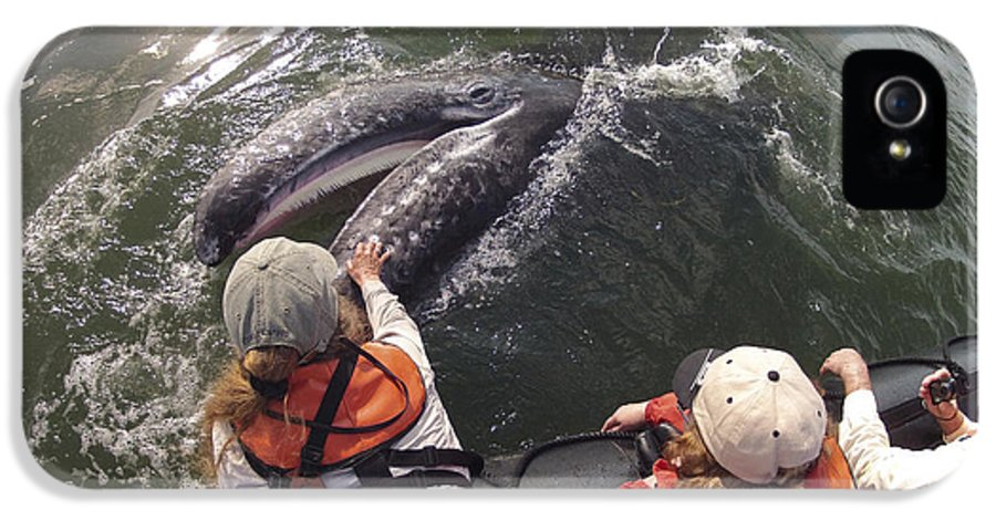 Feb0514 IPhone 5 / 5s Case featuring the photograph Gray Whale Calf And Tourists Baja by Flip Nicklin