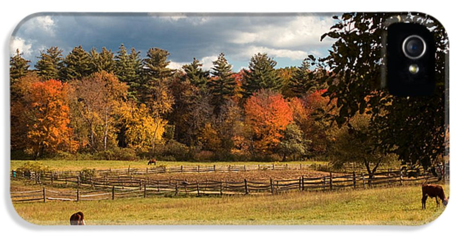 Autumn IPhone 5 / 5s Case featuring the photograph Grazing On The Farm by Joann Vitali