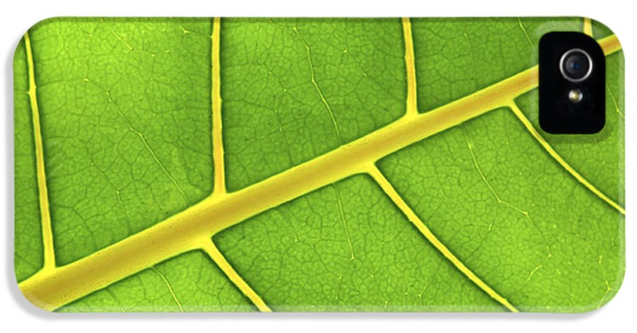 Leaves IPhone 5 / 5s Case featuring the photograph Green Leaf Close Up by Elena Elisseeva