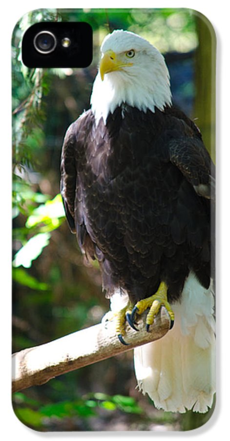 Bald Eagle IPhone 5 / 5s Case featuring the photograph Guarding Liberty by Tikvah's Hope