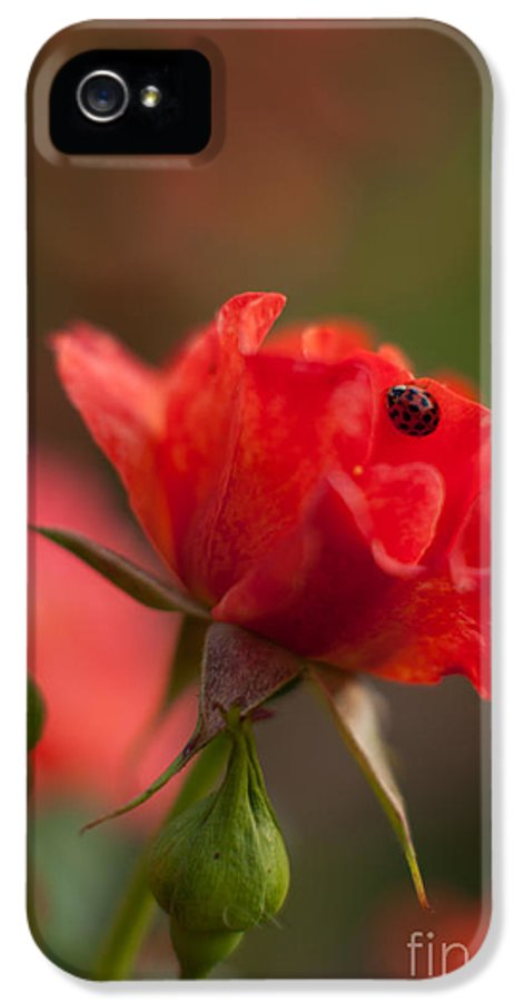 Rose IPhone 5 / 5s Case featuring the photograph Guest Of The Queen by Mike Reid