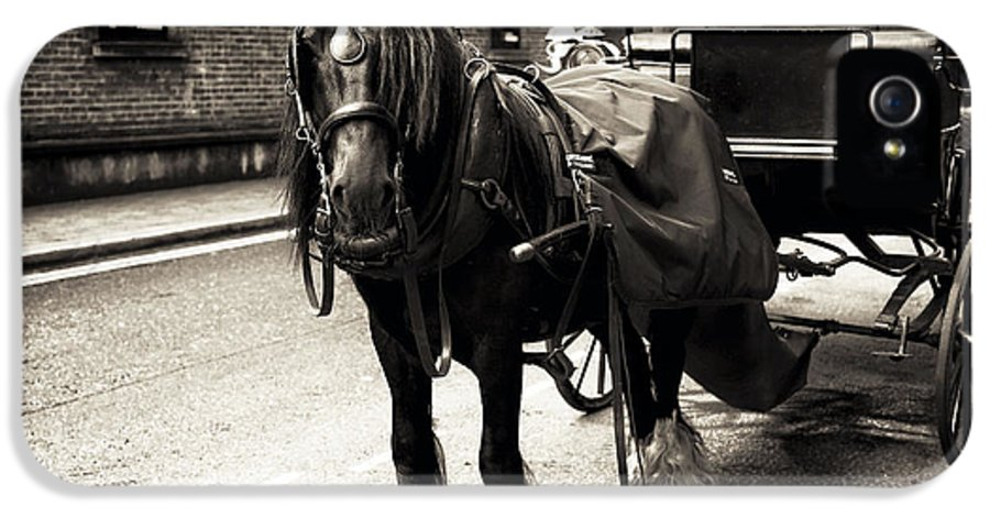 Guinness Horse IPhone 5 / 5s Case featuring the photograph Guinness Horse by John Rizzuto