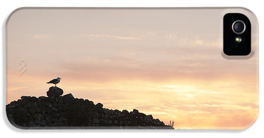 2013 IPhone 5 / 5s Case featuring the photograph Gull At Dusk by Anne Gilbert