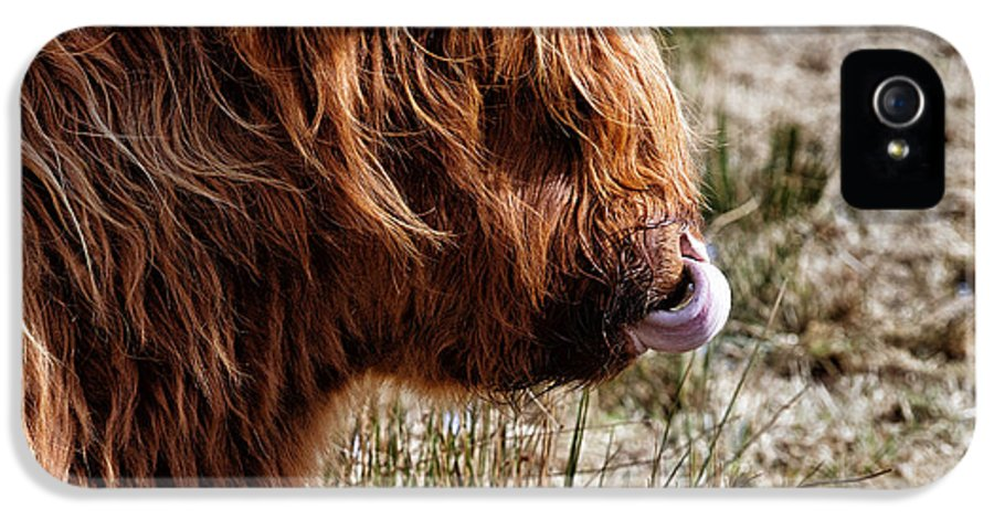 Highland Cow IPhone 5 / 5s Case featuring the photograph Highland Coo With Tongue In Nose by John Farnan