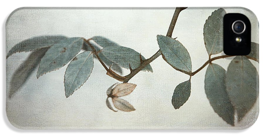 Leaves IPhone 5 / 5s Case featuring the photograph How Delicate This Balance by Laurie Search