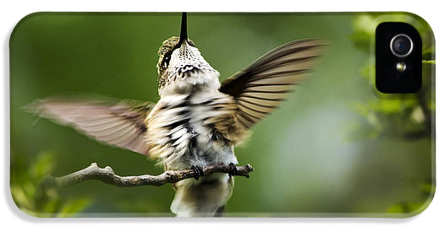 Hummingbird IPhone 5 / 5s Case featuring the photograph Hummingbird Happy Dance by Christina Rollo