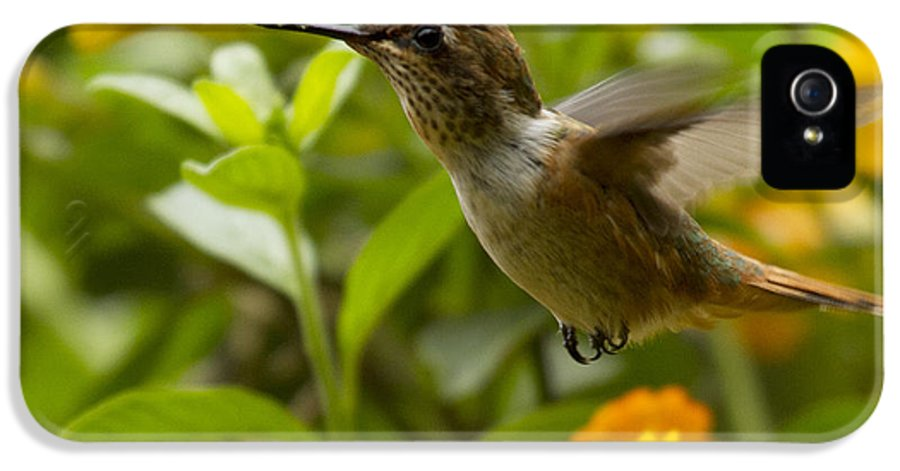Hummingbird IPhone 5 / 5s Case featuring the photograph Hummingbird Looking For Food by Heiko Koehrer-Wagner