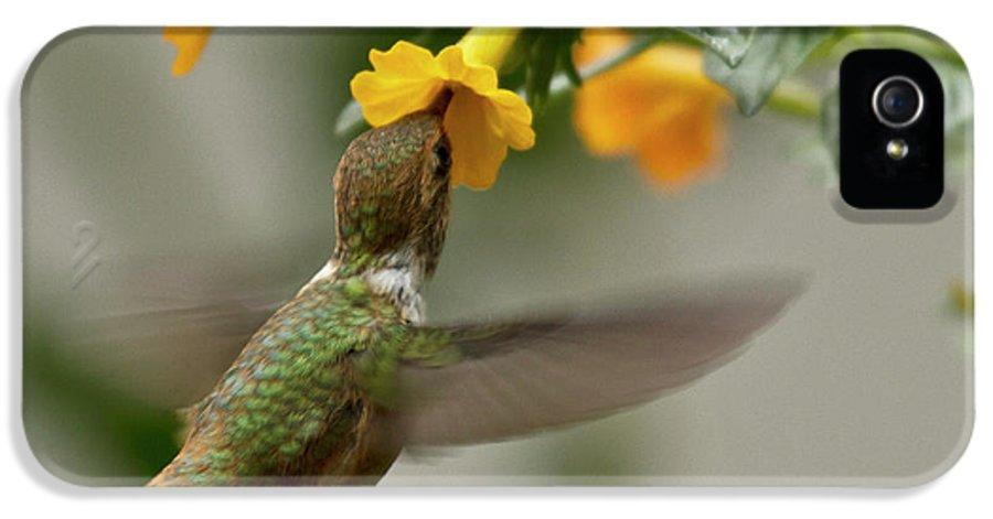 Rufous Hummingbird IPhone 5 / 5s Case featuring the photograph Hummingbird Sips Nectar by Heiko Koehrer-Wagner
