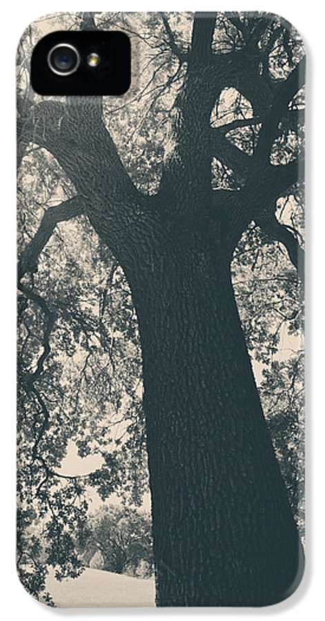 Mt. Diablo State Park IPhone 5 / 5s Case featuring the photograph I Can't Describe by Laurie Search