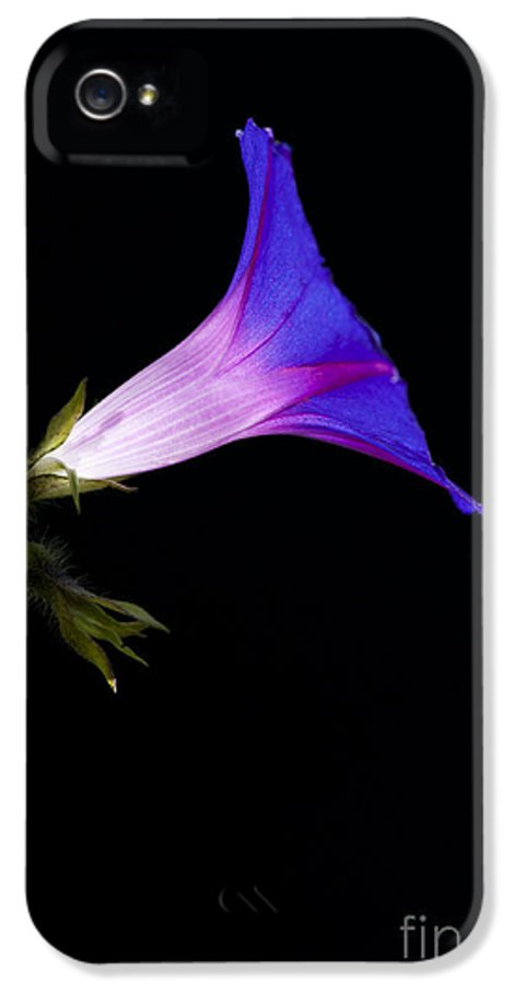 Ipomoea IPhone 5 / 5s Case featuring the photograph Ipomoea Morning Glory by Tim Gainey