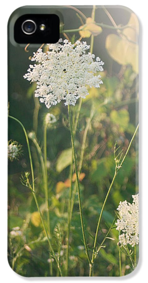 Queen Anne's Lace IPhone 5 / 5s Case featuring the photograph It Was A Summer Of Love by Laurie Search