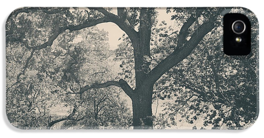 Mt. Diablo State Park IPhone 5 / 5s Case featuring the photograph Just Hold On by Laurie Search