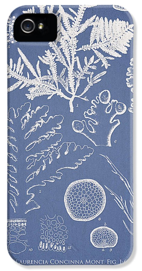 Algae IPhone 5 / 5s Case featuring the drawing Laurencia Concinna And Hypnea Musciformis by Aged Pixel