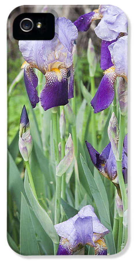 Iris IPhone 5 / 5s Case featuring the photograph Lavender Iris Group by Teresa Mucha