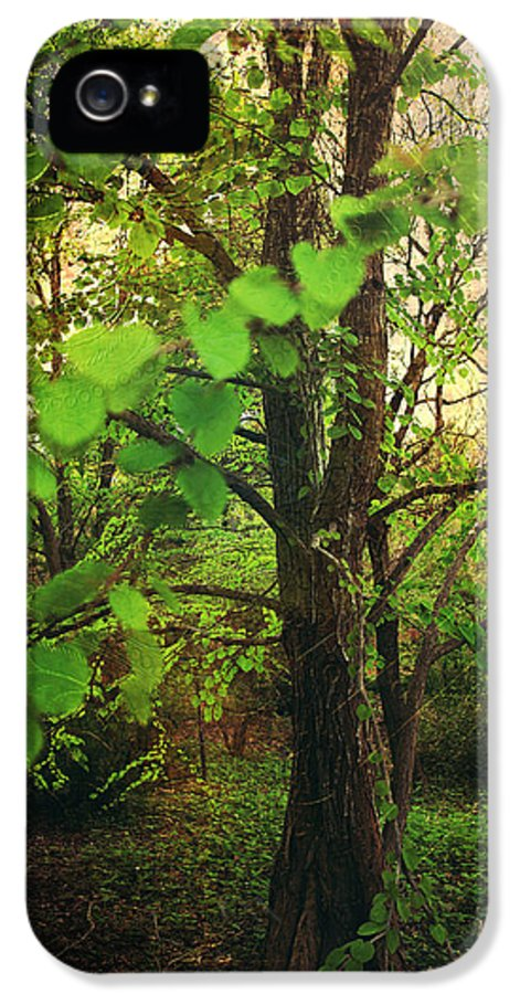 Quarryhill Botanical Garden IPhone 5 / 5s Case featuring the photograph Leaves In My Hair by Laurie Search